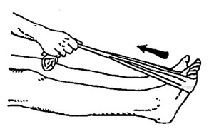 calf stretches for runners