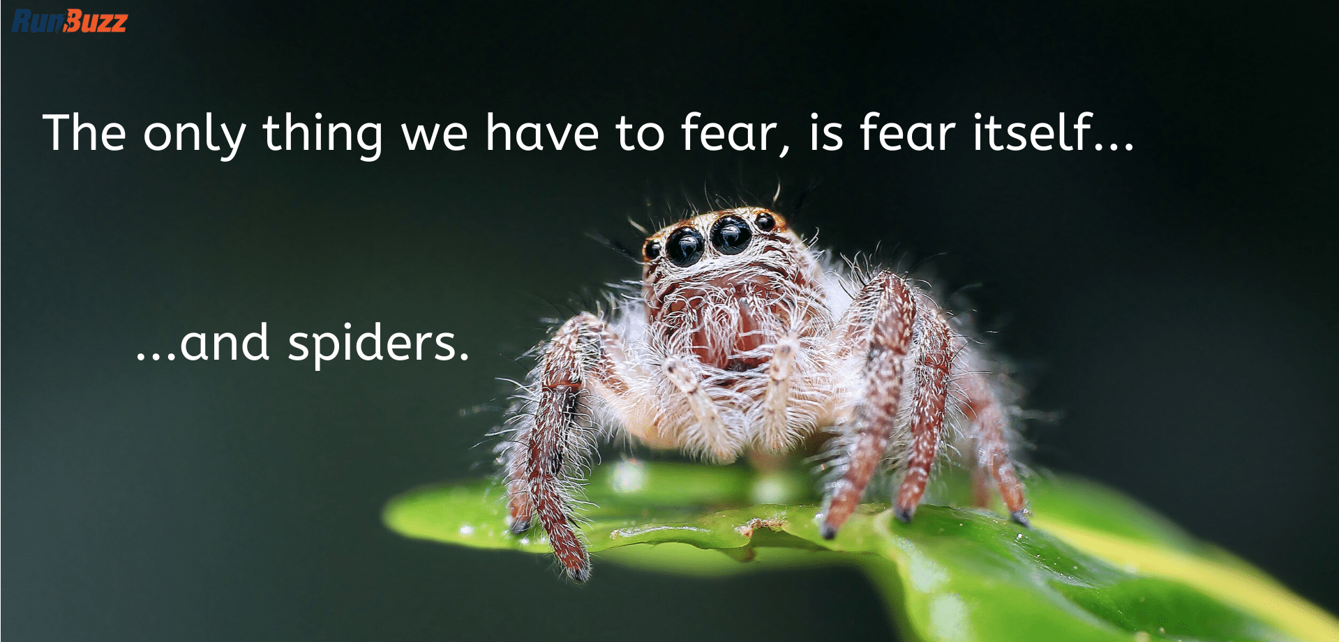 The-only-thing-we-have-to-fear-is-fear-itself