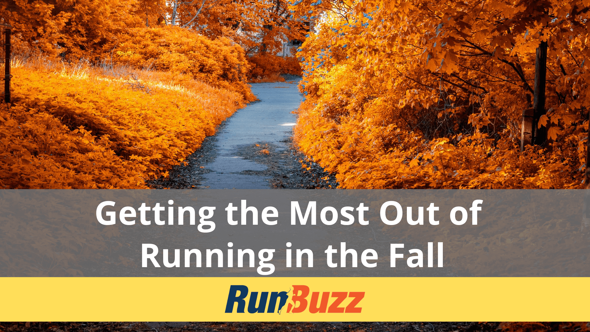 Getting-the-Most-Out-of-Running-in-the-Fall